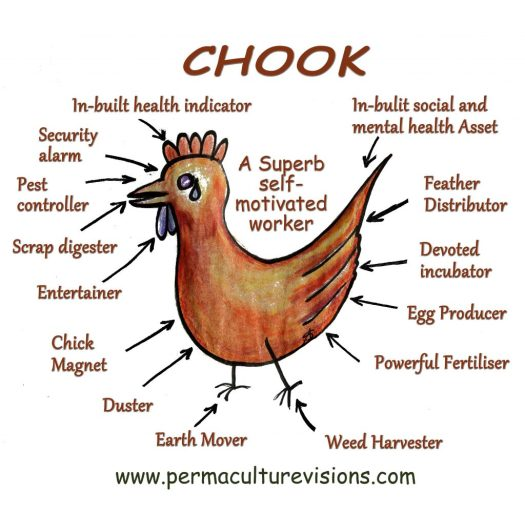 chook_small_facebook