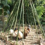 Natural weaving, living fencing