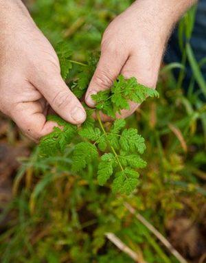 Op zoek naar wilde eetbare planten