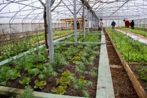 Cours de maraichage permaculture avec Charles Hervé Gruyer