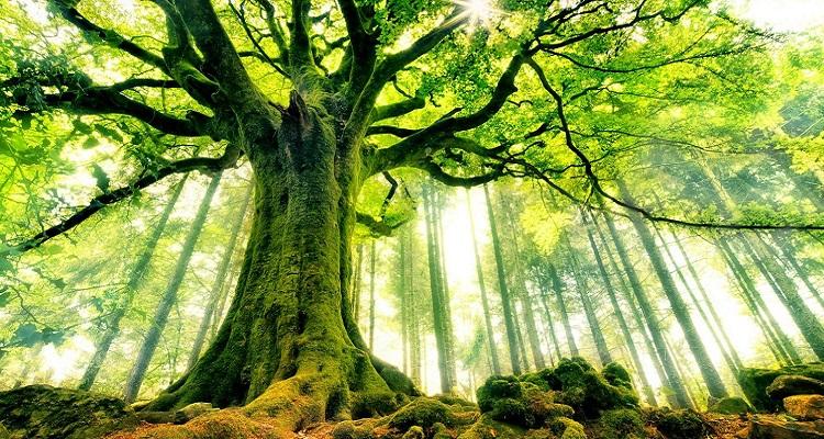 plantons-un-milion-arbres