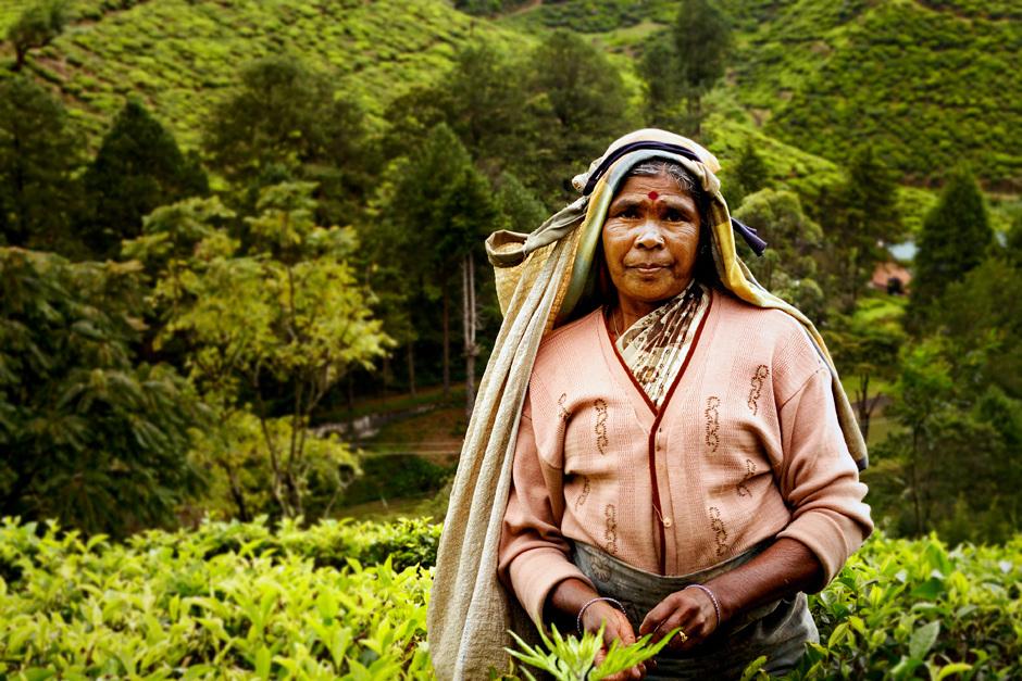 6. Sri Lanka, Nuwara Eliya. Zbieraczki herbaty to zazwyczaj Tamilki. (Fot. Ania Błażejewska)