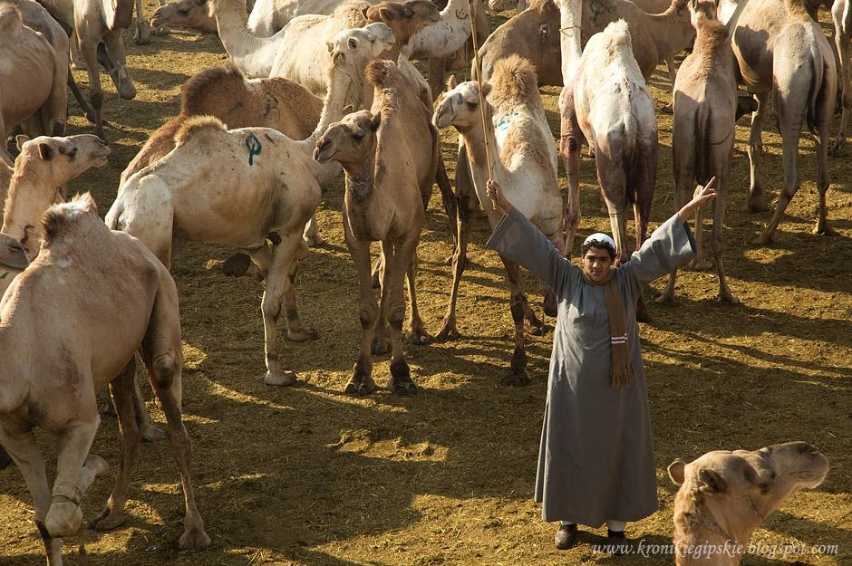 01_Camel_market_Birkasz
