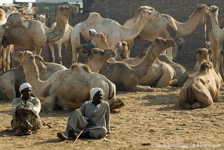 Camel_market_Birkasz