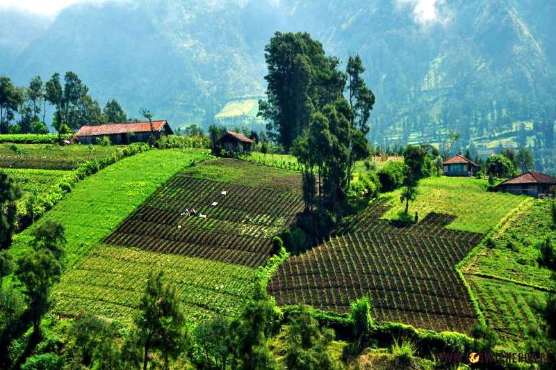 Indonezja - okolice Cemoro Lawang