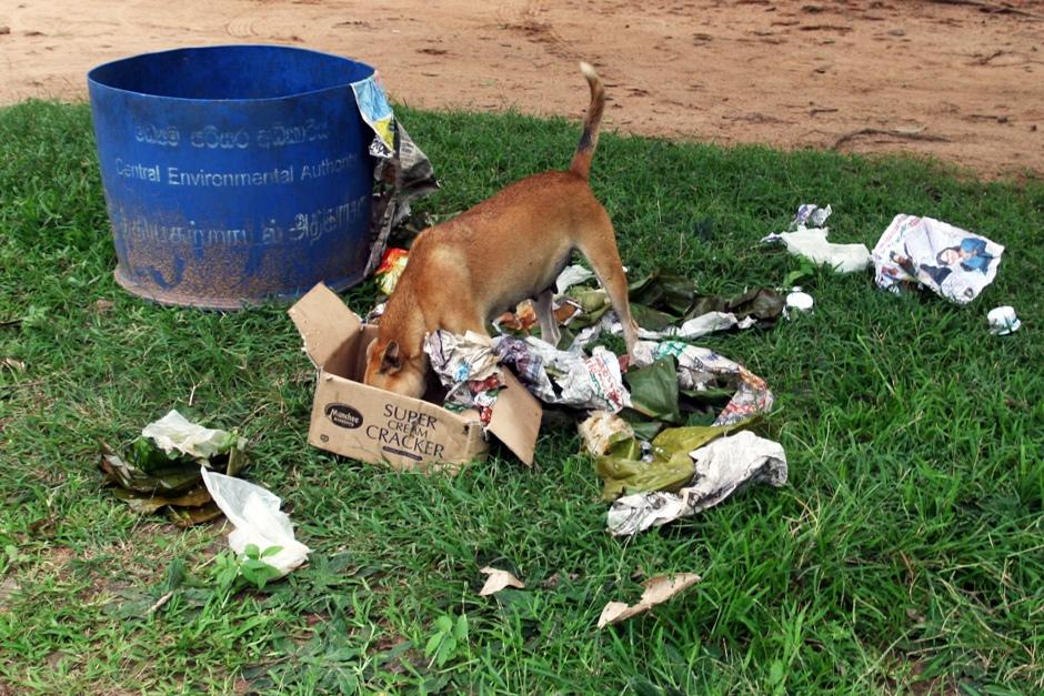 07. Sri Lanka. Psy też muszą coś jeść. Bezpańskie zwierzęta są częste na SriLance, ale ludzie nie muszą się ich bać - psy rzadko atakują. (Fot. Ewa Serwicka)