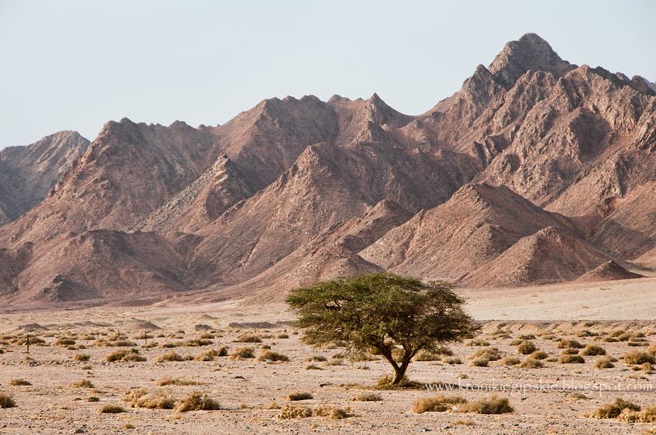 3. EGIPT, Synaj. Pomimo, że pustynia kojarzy nam się z bezkresem piasku, Pustynia Zachodnia podobnie jak wnętrze Półwyspu Synaj, jest w większej części skalista. (Fot. Anna Krukowska)