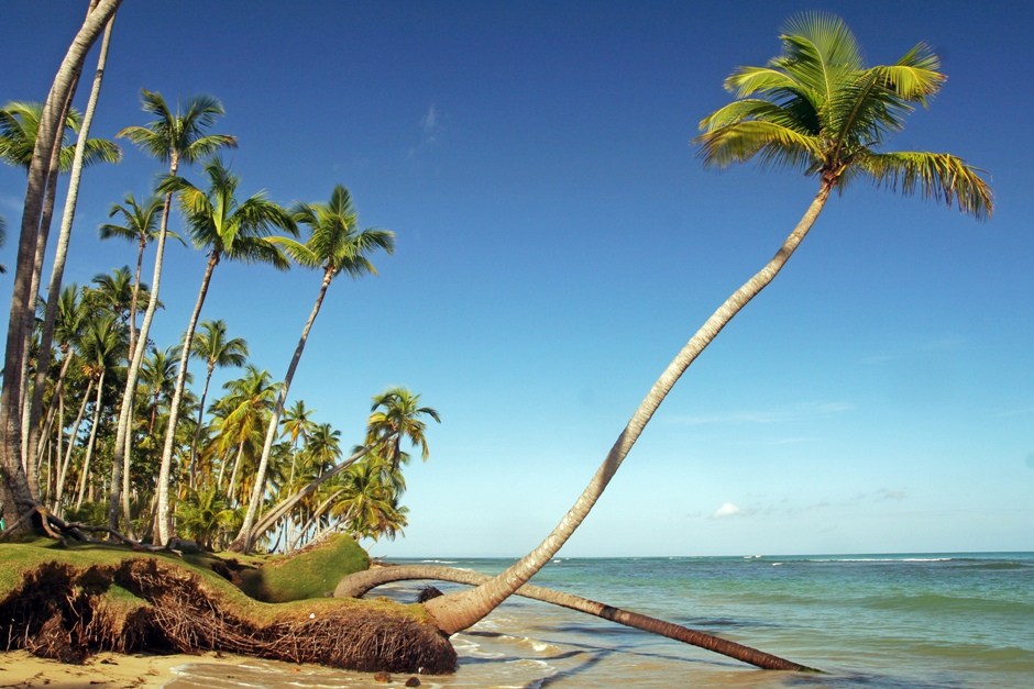 8. DOMINIKANA, Playa Bonita. Palmy pochylają się w kierunku morza, które podmywa ich korzenie. Z biegiem czasu przewracają się do wody. (Fot. Ewa Serwicka)