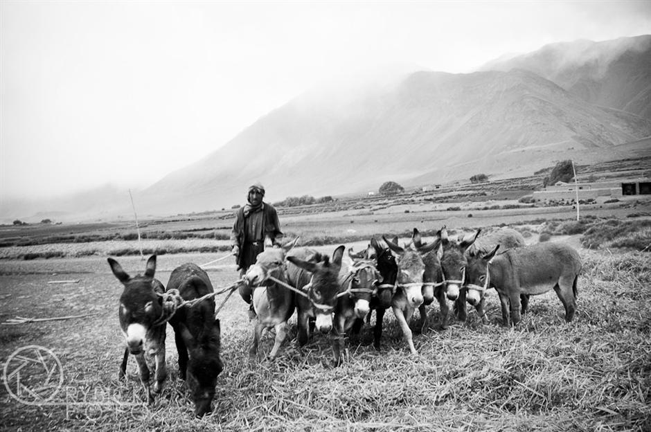 10. AFGANISTAN, prowincja Badachsztan. Młócka zboża za pomocą osłów. (Fot. Jakub Rybicki)