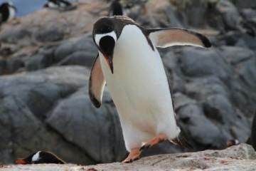 Zapraszam na bożonarodzeniowe opowieści z Antarktydy! (Fot. Grzegorz Dopierała)