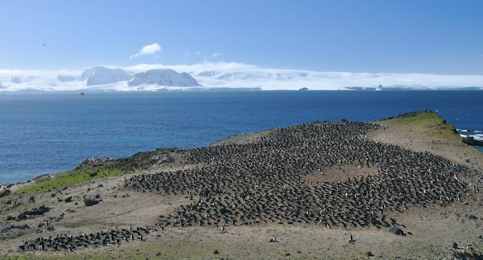 22. ANTARKTYKA, Wyspa Króla Jerzego. Największa w okolicy kolonia pingwinów białookich. (Fot. Piotr Horzela)