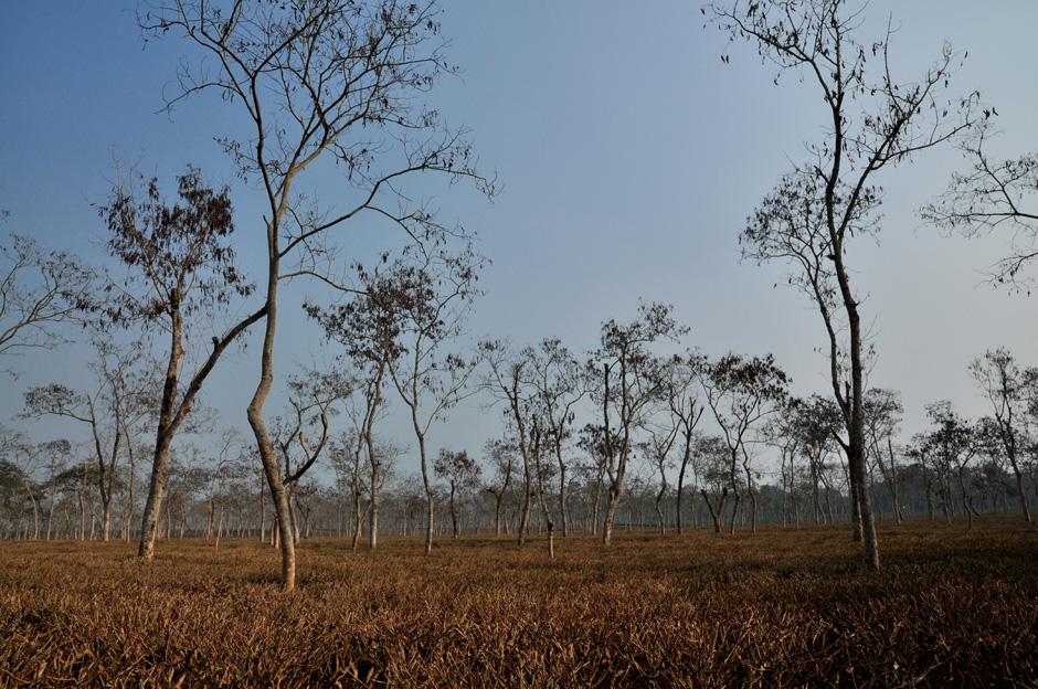 Plantacja herbaty w Bangladeszu
