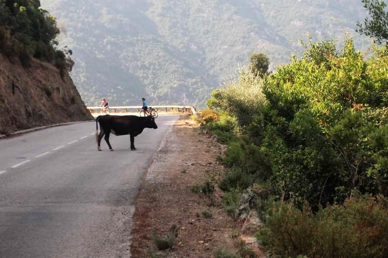 Podróz przez Korsykę