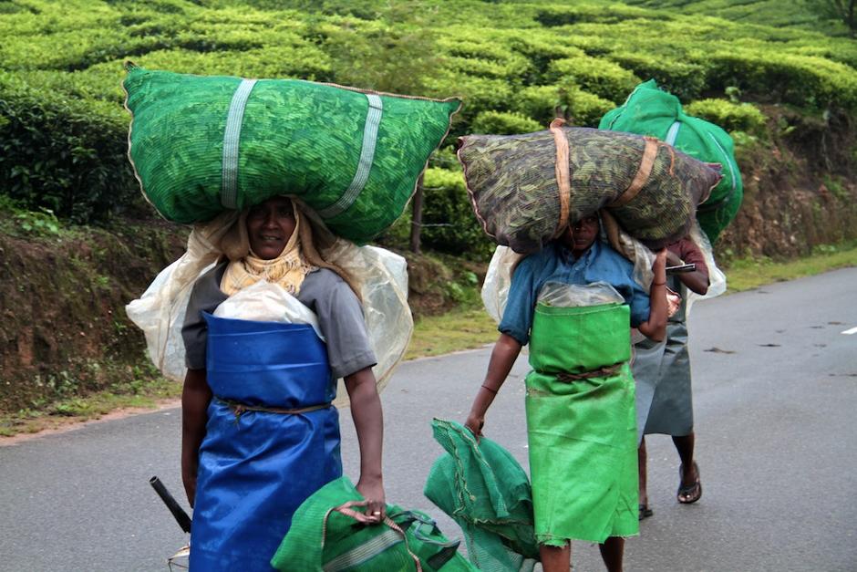 Praca na plantacji herbaty