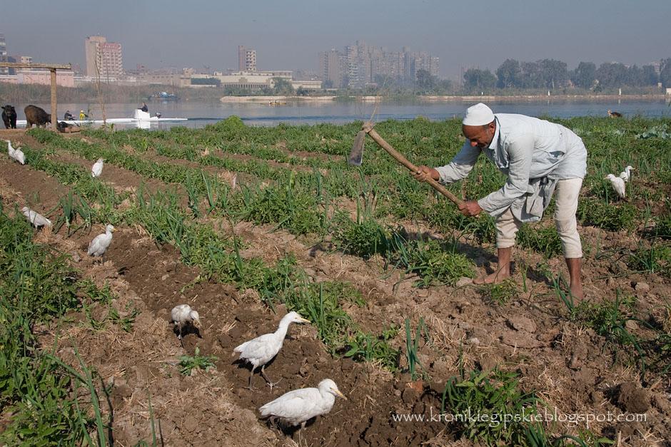 Uprawa ziemi nad brzegami Nilu