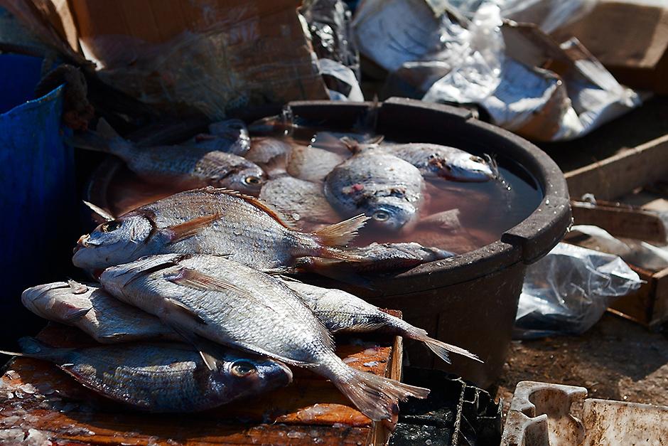 Marokańskie jedzenie tuż po złowieniu