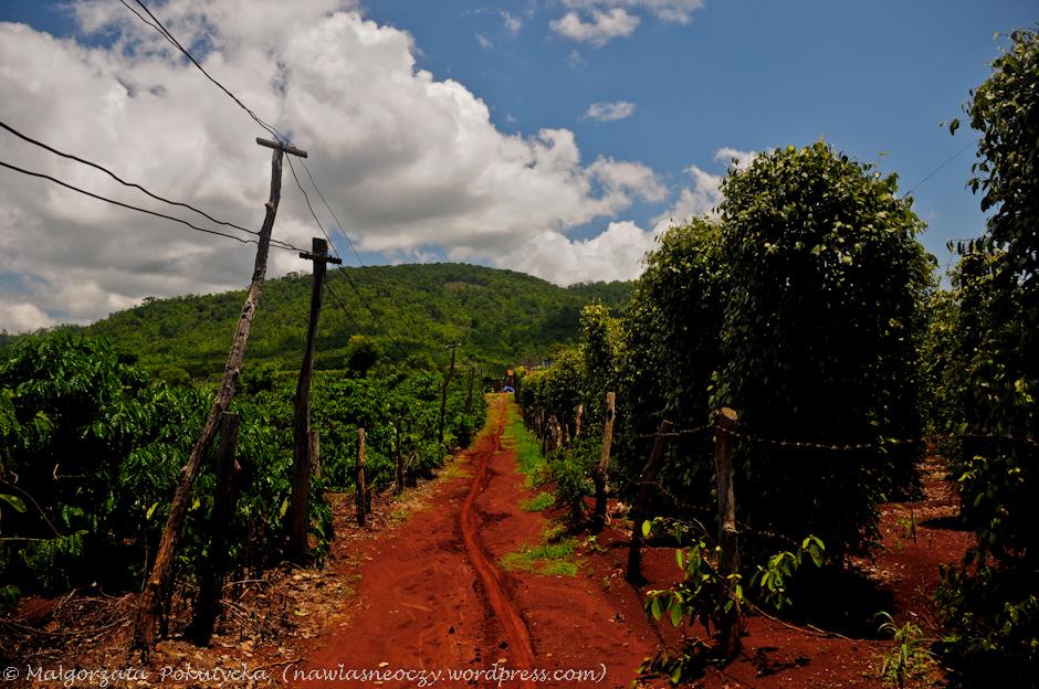 Plantacja kawy i pieprzu w Wietnamie