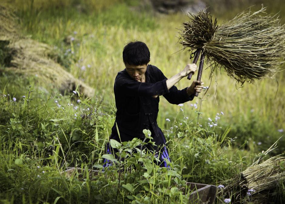 rolnik, rolnik, rolnik sam w dolinie