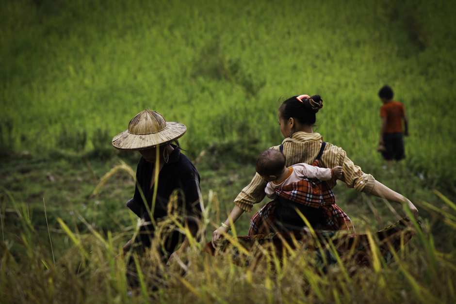 wietnamskie kobiety pracujące na polach ryżowych