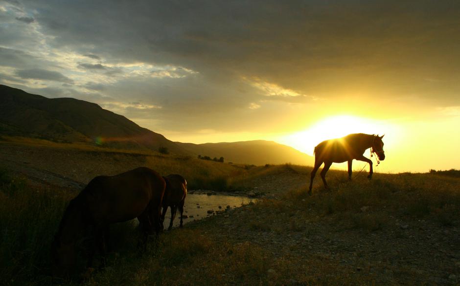 Kazachstan - konie na stepie