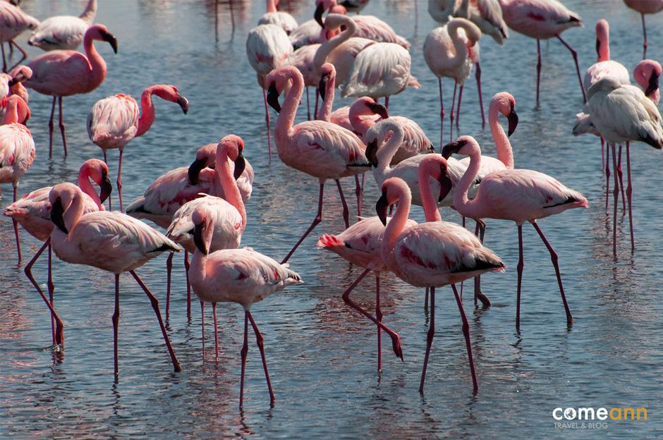 Różowe flamingii. Zdjęcia z podróży przez Namibię w Afryce