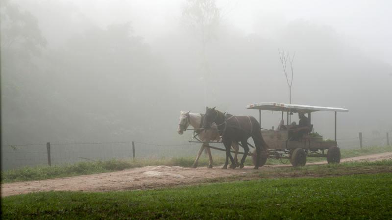 Mennonici z Belize