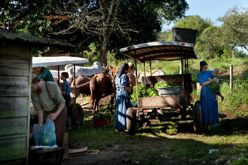 Market w wiosce Mennonitów - podróż przez Belize
