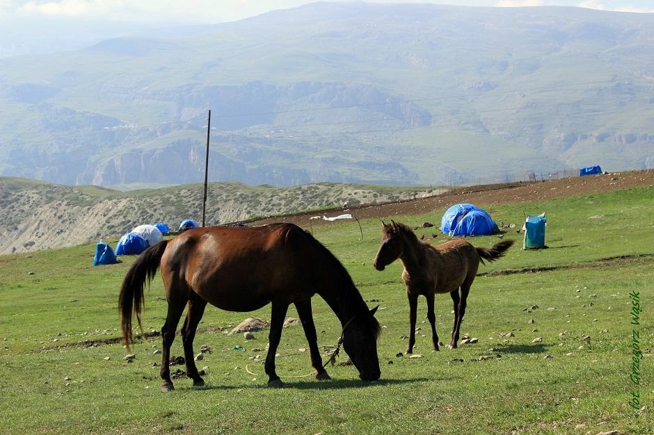 Jurty na azerskim stepie - zdjęcia