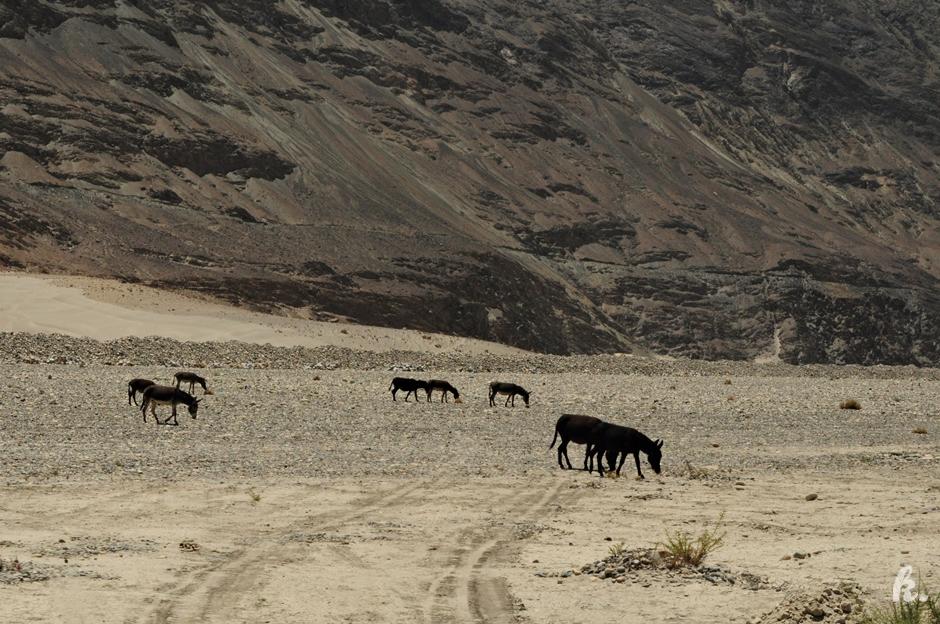 Dzikie zwierzęta w Himalajach - foto z podróży