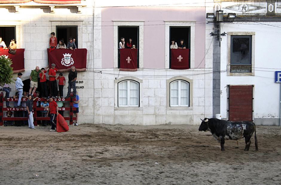 Portugalska corrida - zdjęcia