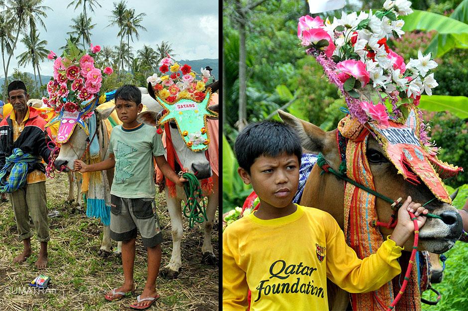 Wyścigi byków na Sumatrze - foto z podróży do Indonezji