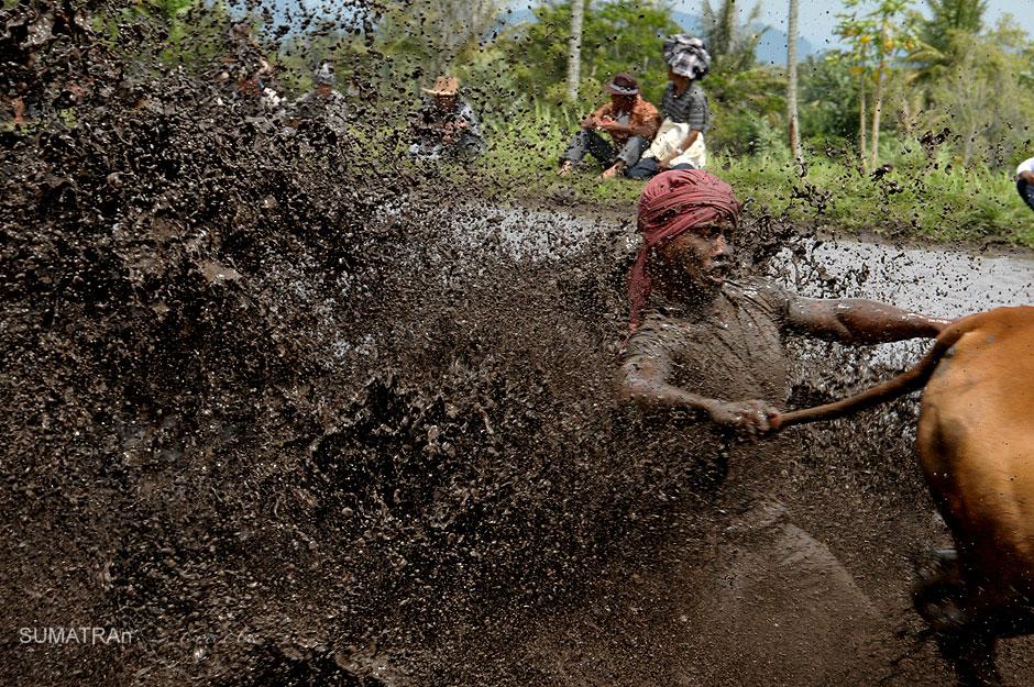 Zdjęcia z Indonezji - zawody Pacu Jawi