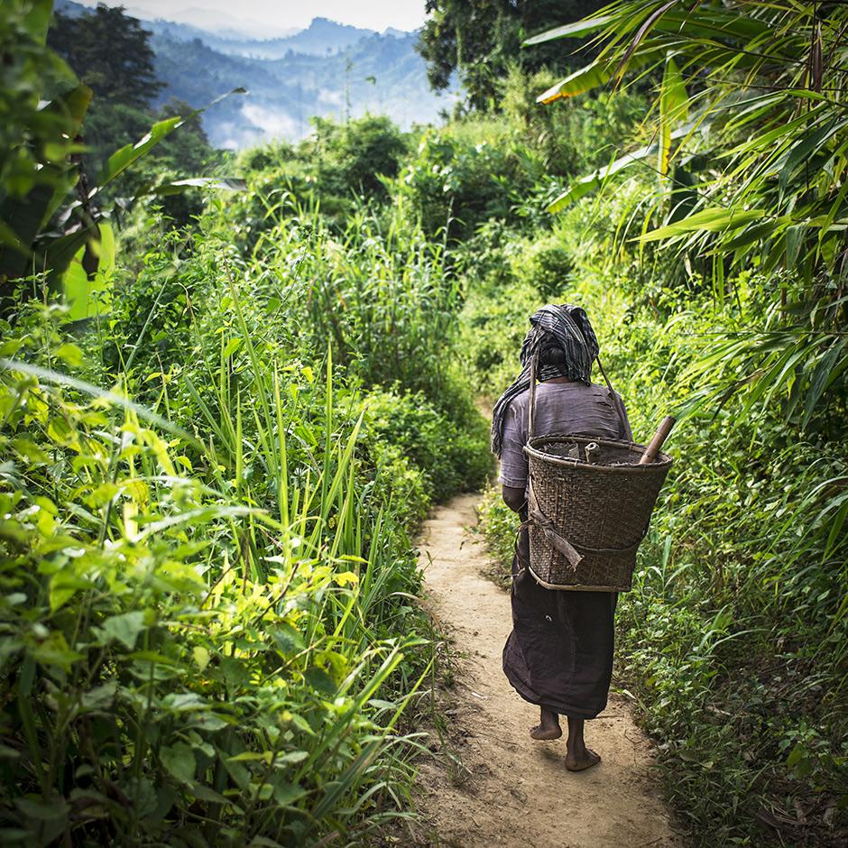 Dżungla w Bangladeszu - foto z podróży