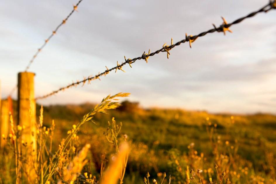 Nowa Zelandia poprzecinana jest ogrodzeniami