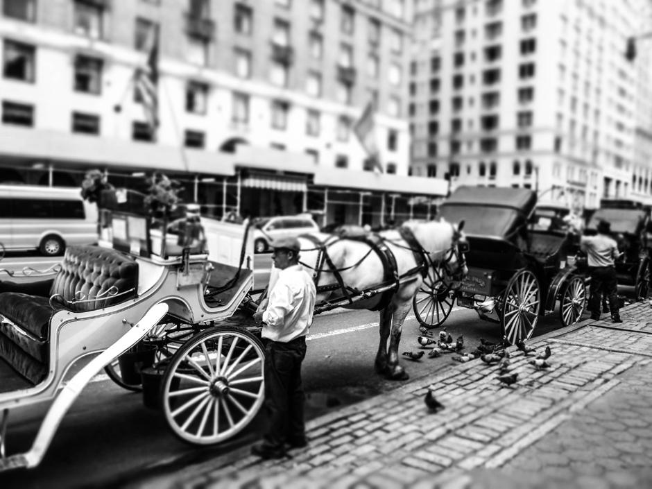Dorożki w Nowym Jorku - foto