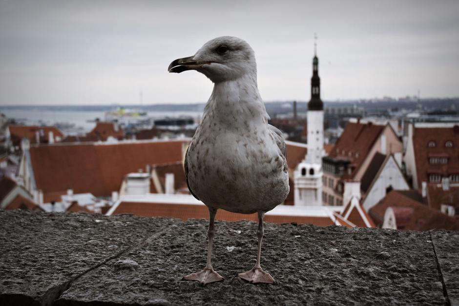 Stare Miasto i port w Tallinie - zdjęcia z Estonii