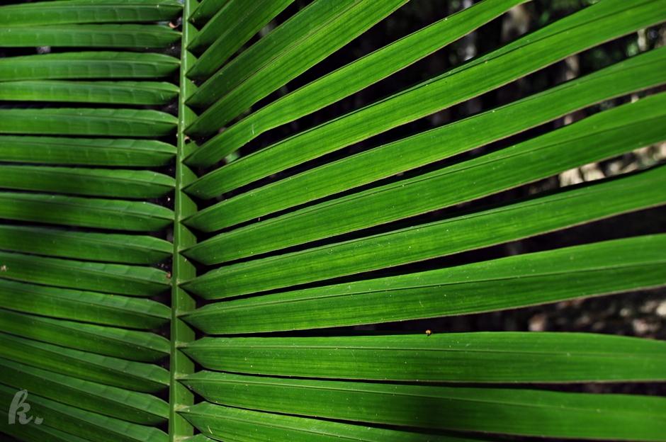Soczysta zieleń na Belize