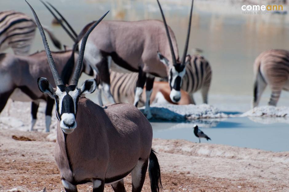 Z aparatem przez Afrykę - zwierzęta