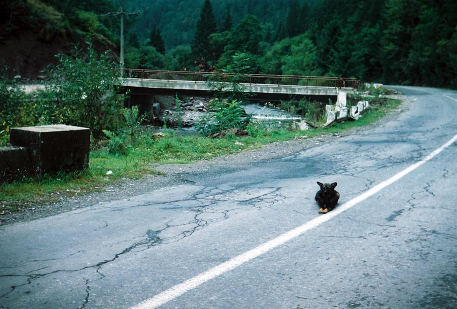 Autostop w Rumunii, gdzieś w górach - foto