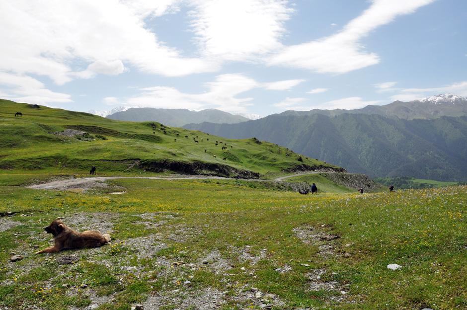 Owczarek kaukaski - trekking w Tuszetii