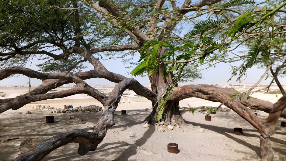 Bahrain, Tree of Live - foto