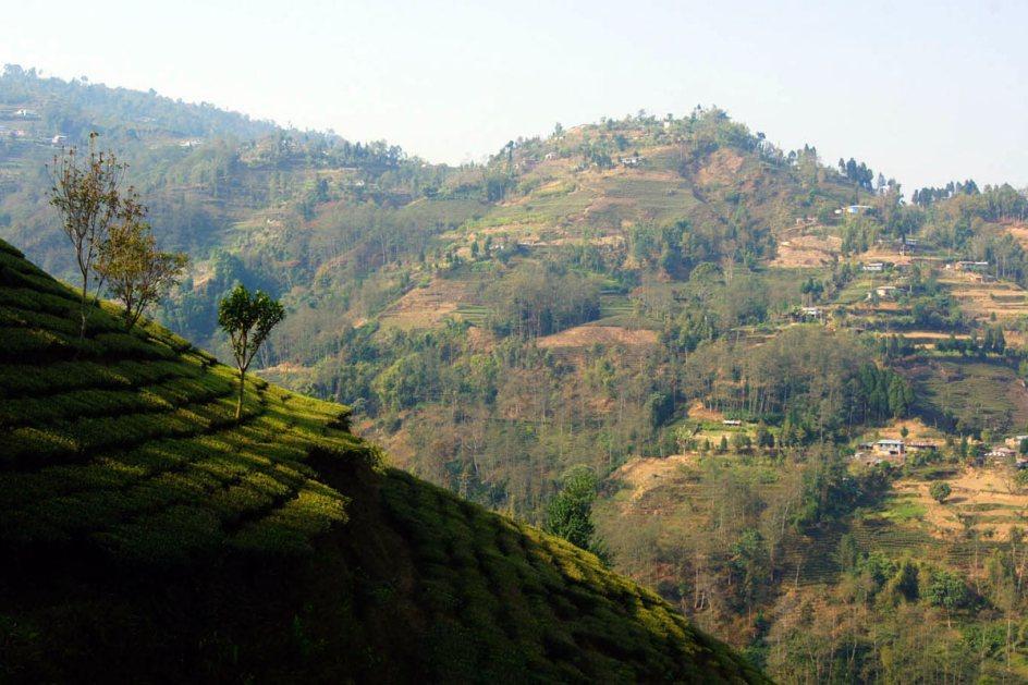 Herbaciane pola w Nepalu