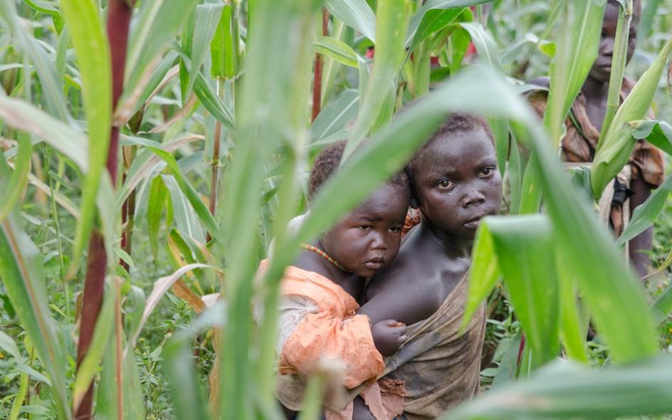 Afrykańskie dzieci w kukurydzy