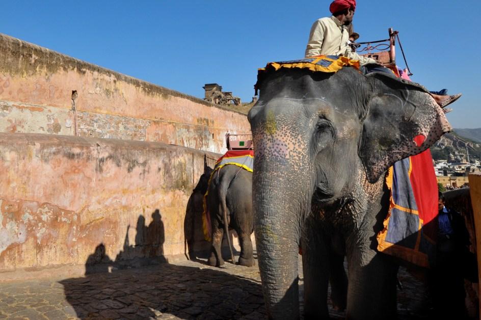 Słoń w Dżajpurze