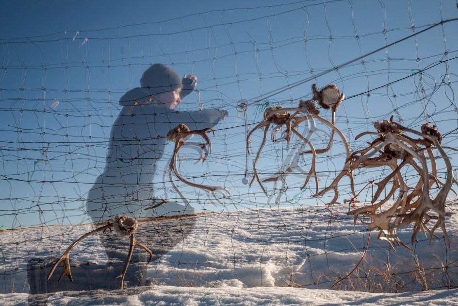 Pastwiska dla reniferów w Finlandii