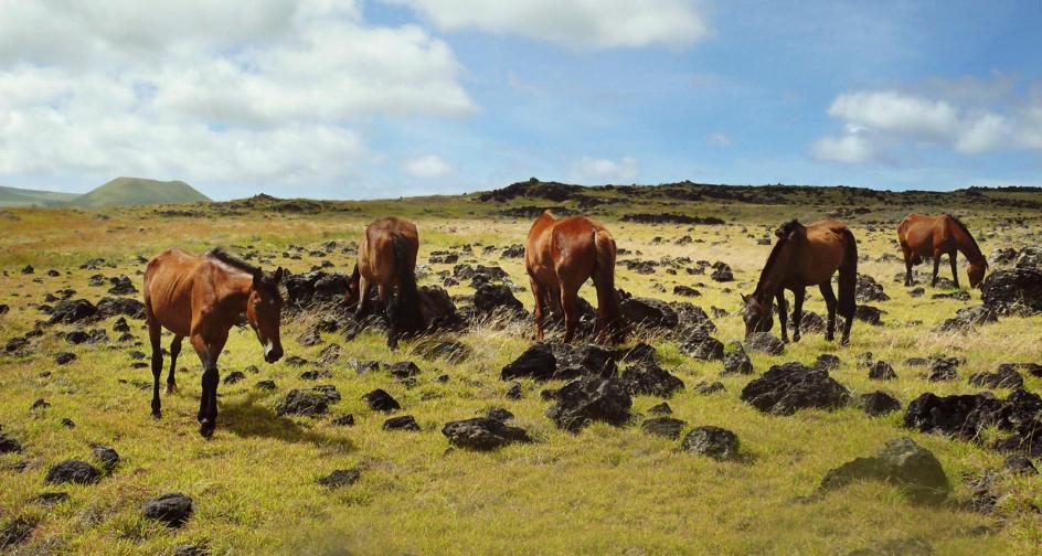 Hodowla koni na Wyspie Wielkanocnej - foto