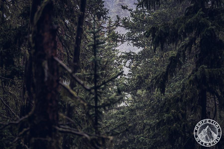 Misty forest downpour
