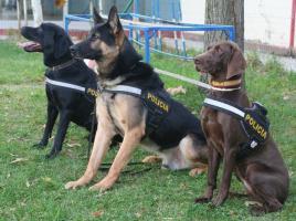 """alt=""""perros de la Policía Nacional"""""""