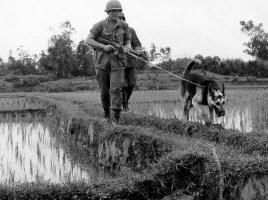 """alt=""""perros en las guerras"""""""