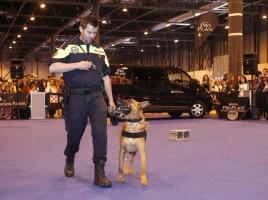 """alt=""""100x100 mascotas exhibiciones perros policía"""""""